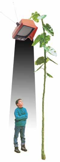 la-planta-que-ilumina.jpg
